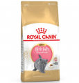 Royal Canin British Shorthair Kitten 2 kg resim